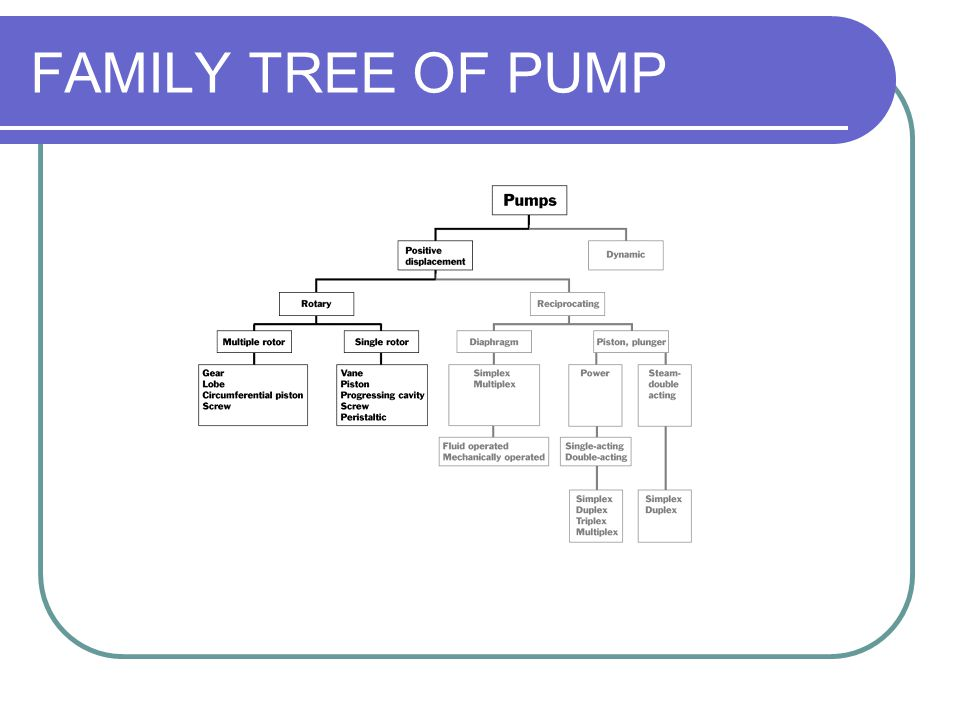 FAMILY TREE OF PUMP