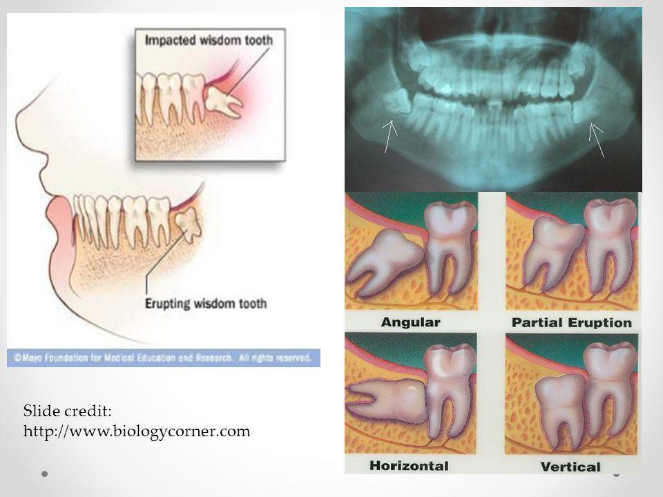 Slide credit: http://www.biologycorner.com