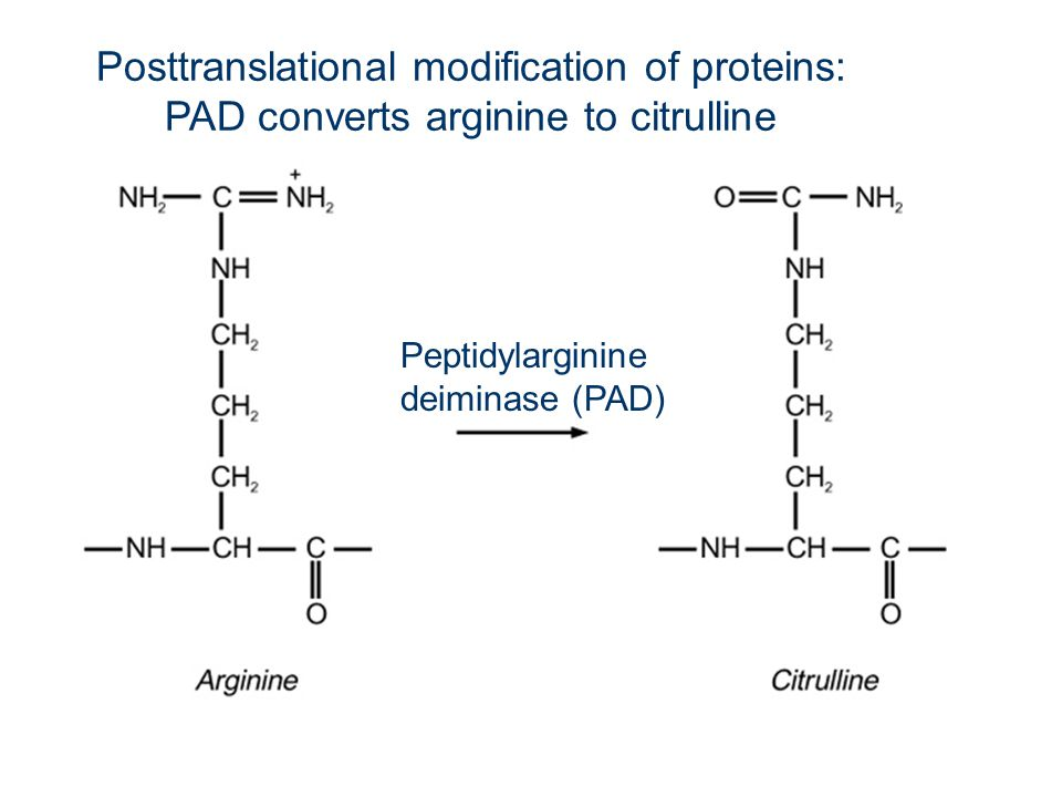 Posttranslational modification of proteins: