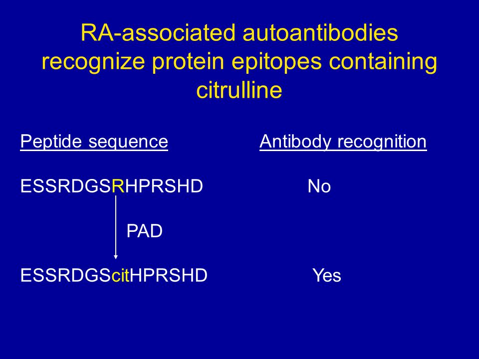 RA-associated autoantibodies recognize protein epitopes containing citrulline