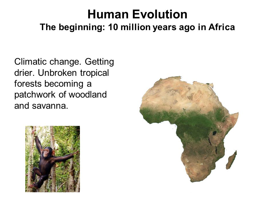 Human Evolution The beginning: 10 million years ago in Africa