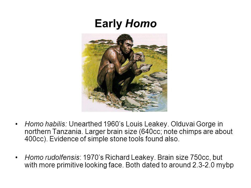 Early Homo