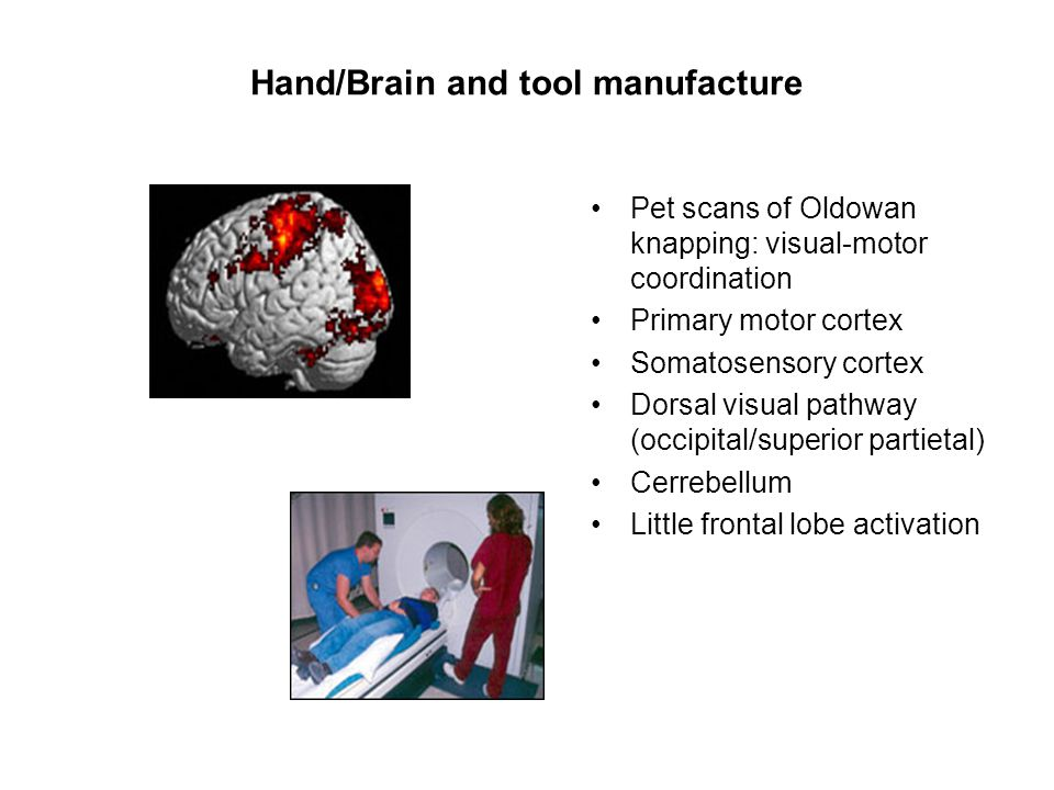 Hand/Brain and tool manufacture