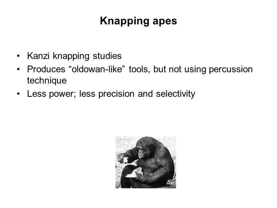 Knapping apes Kanzi knapping studies