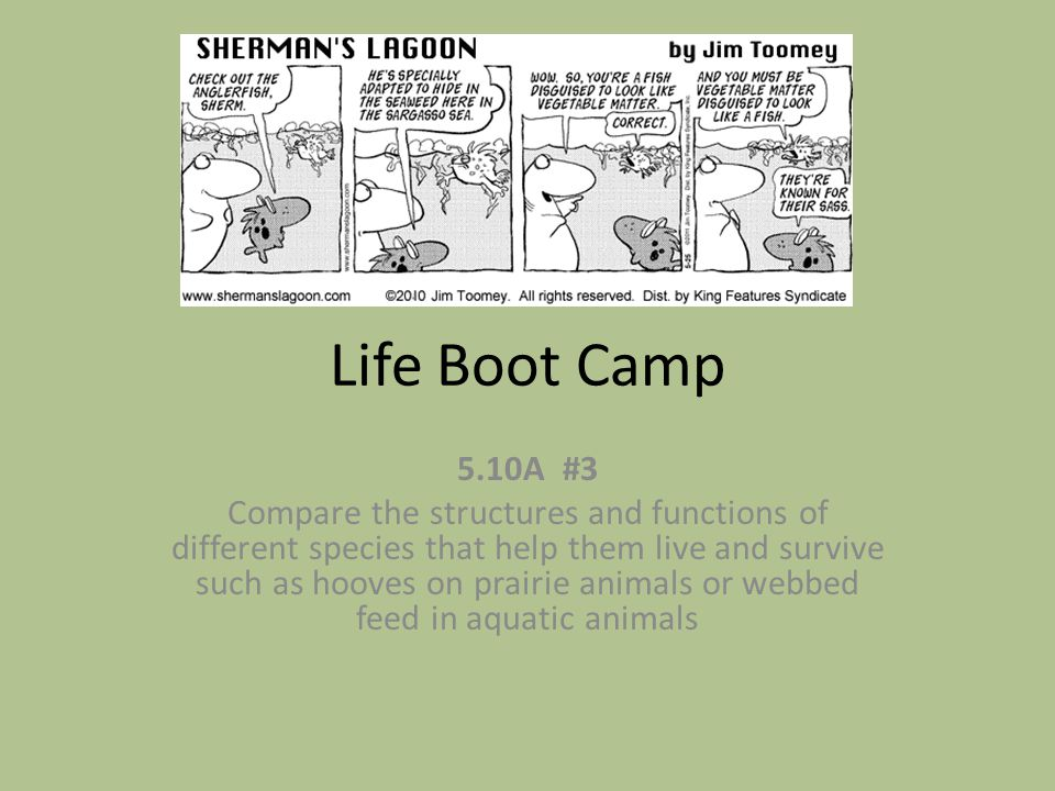Life Boot Camp 5.10A #3.