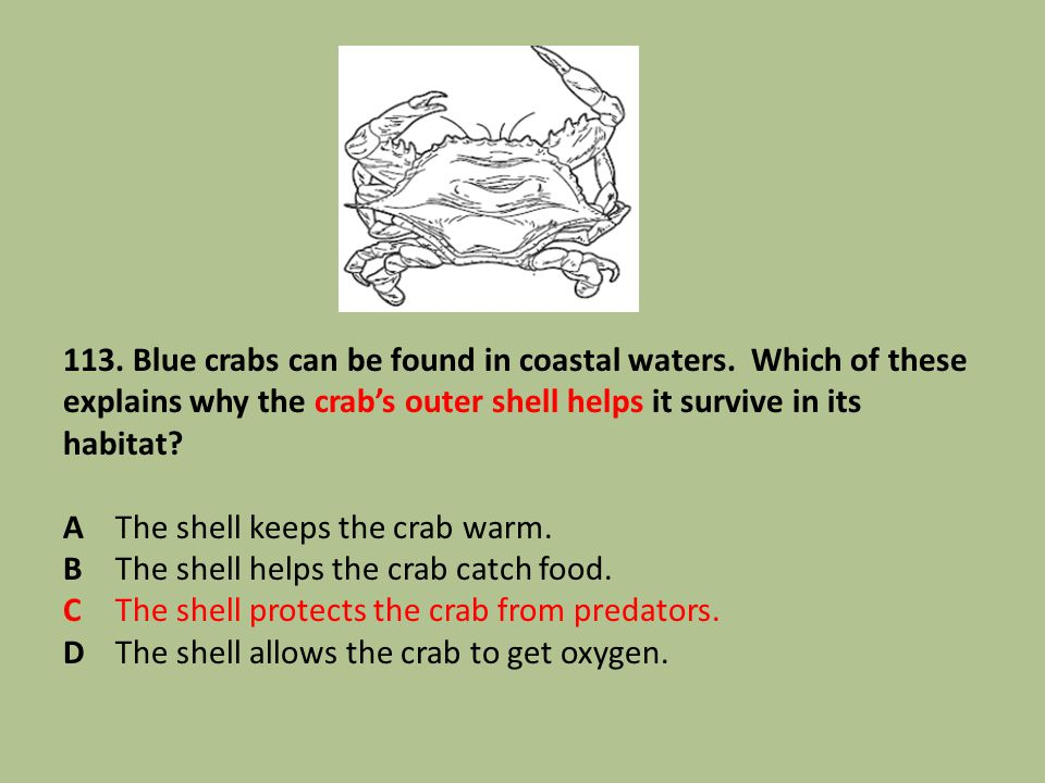 113. Blue crabs can be found in coastal waters