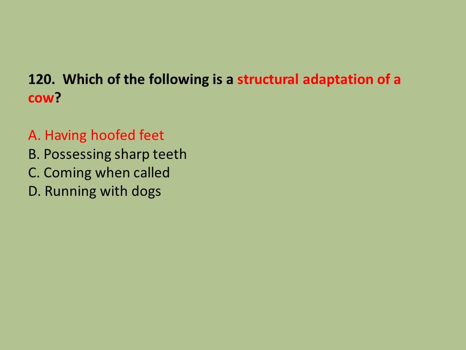 120. Which of the following is a structural adaptation of a cow. A