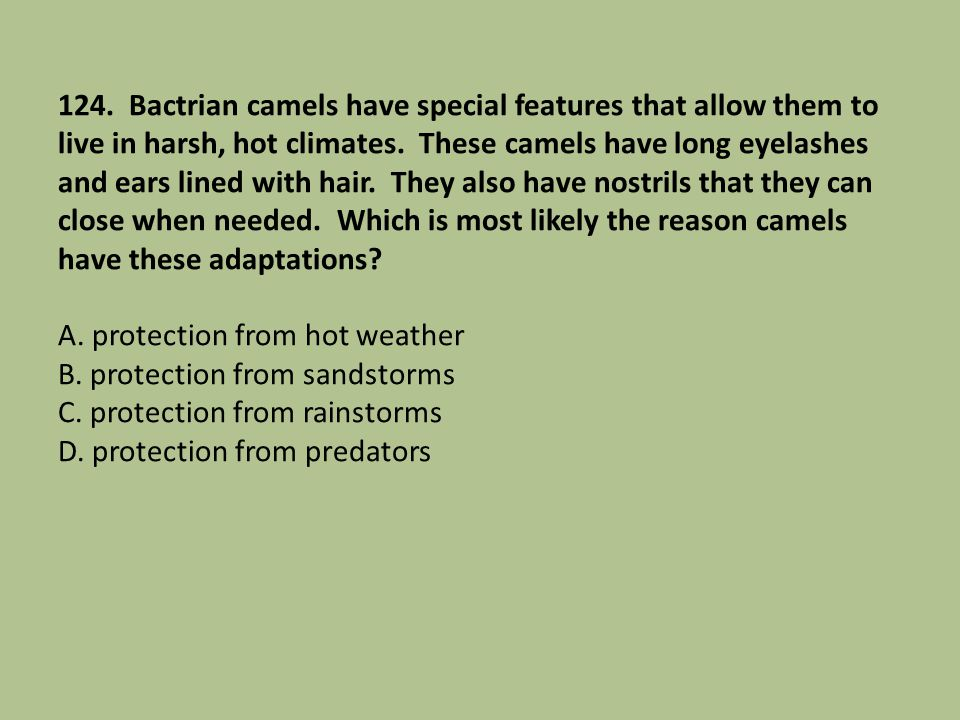 124. Bactrian camels have special features that allow them to live in harsh, hot climates.