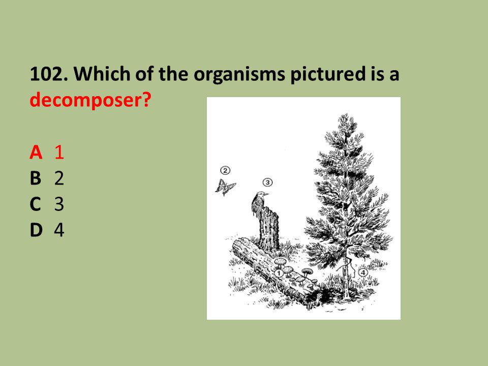 102. Which of the organisms pictured is a decomposer A 1 B 2 C 3 D 4