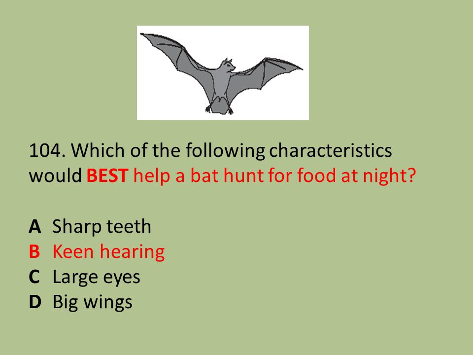 104. Which of the following characteristics would BEST help a bat hunt for food at night.