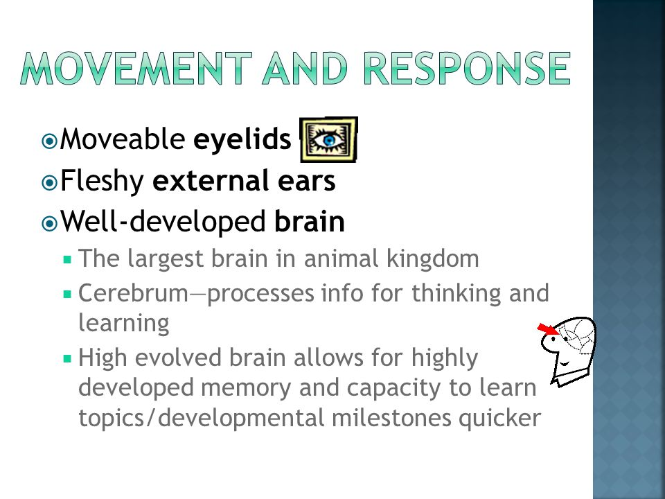 Movement and response Moveable eyelids Fleshy external ears