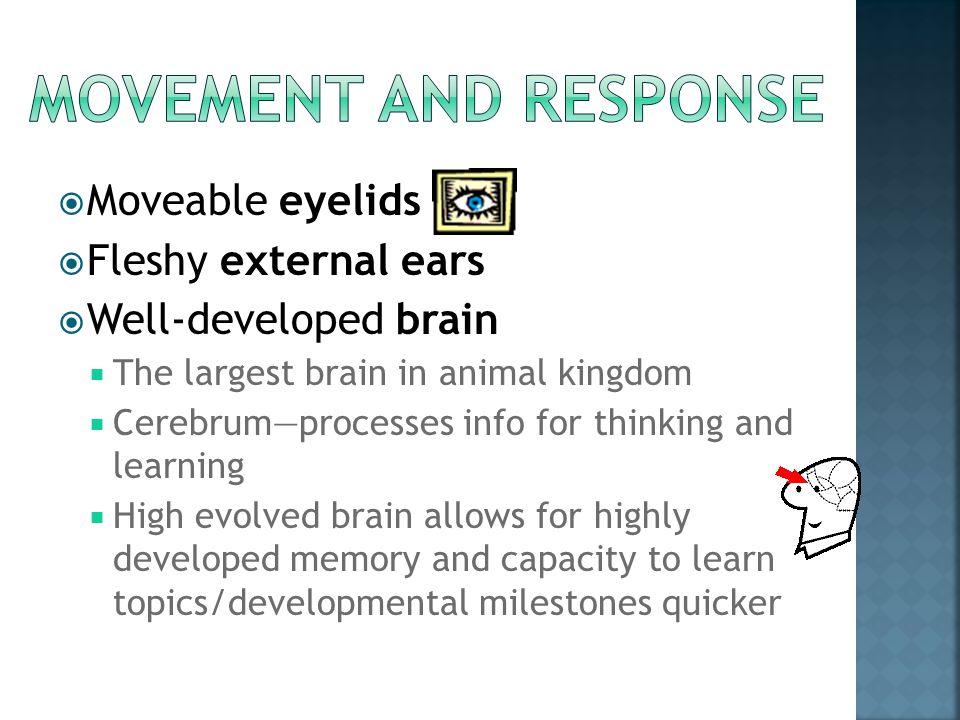 Movement and response Moveable eyelids Fleshy external ears