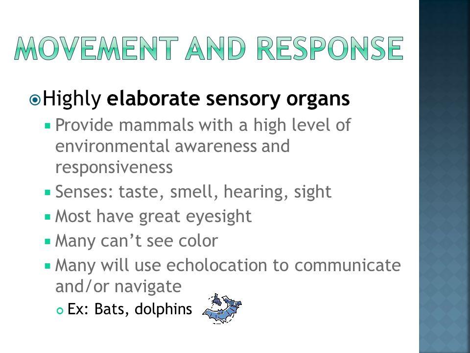 Movement and response Highly elaborate sensory organs