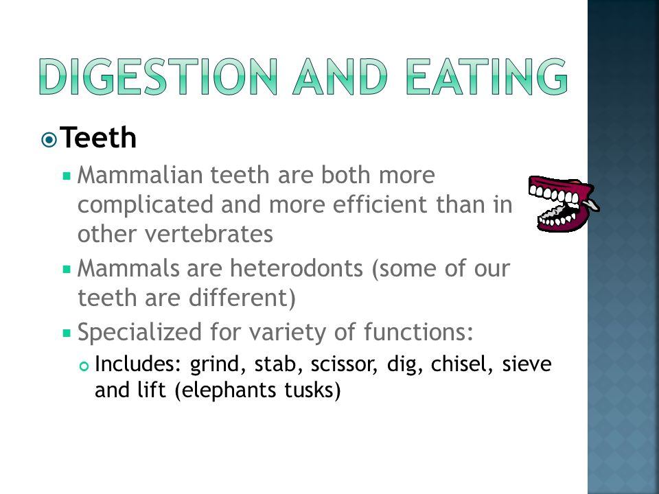 Digestion and Eating Teeth