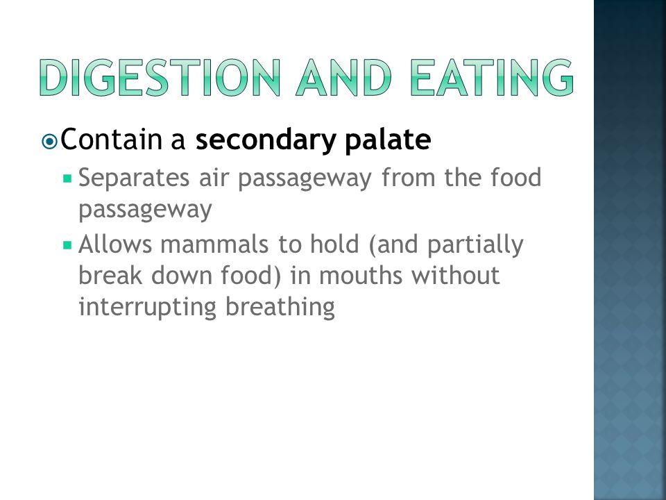 Digestion and Eating Contain a secondary palate