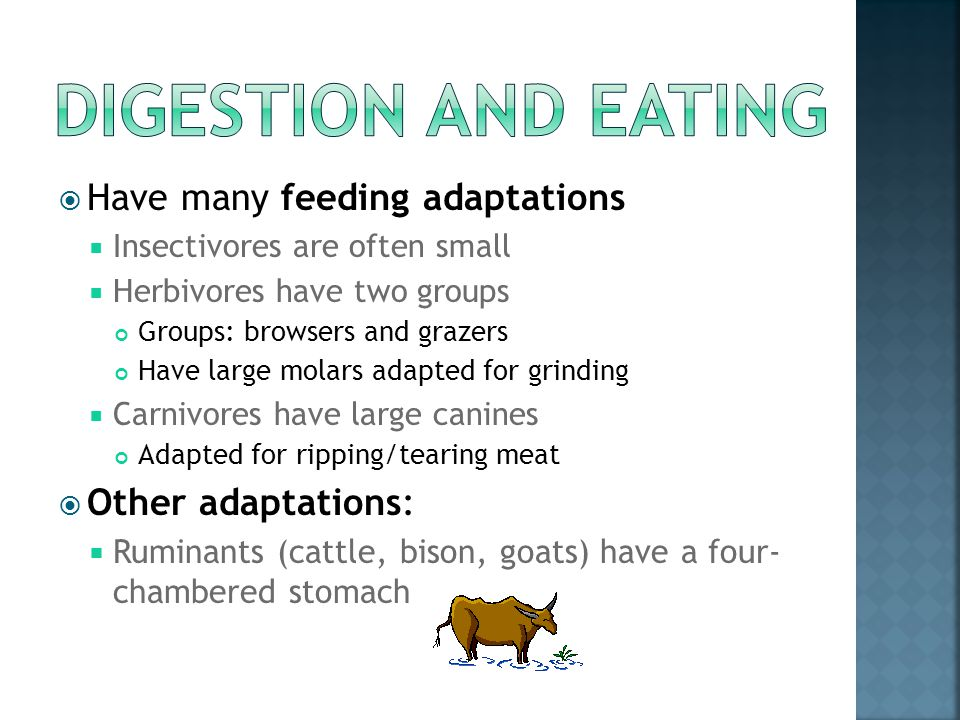 Digestion and Eating Have many feeding adaptations Other adaptations: