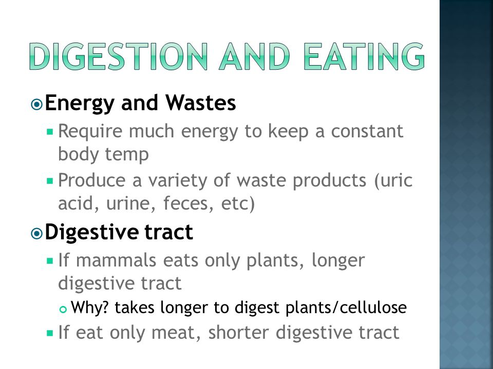 Digestion and Eating Energy and Wastes Digestive tract