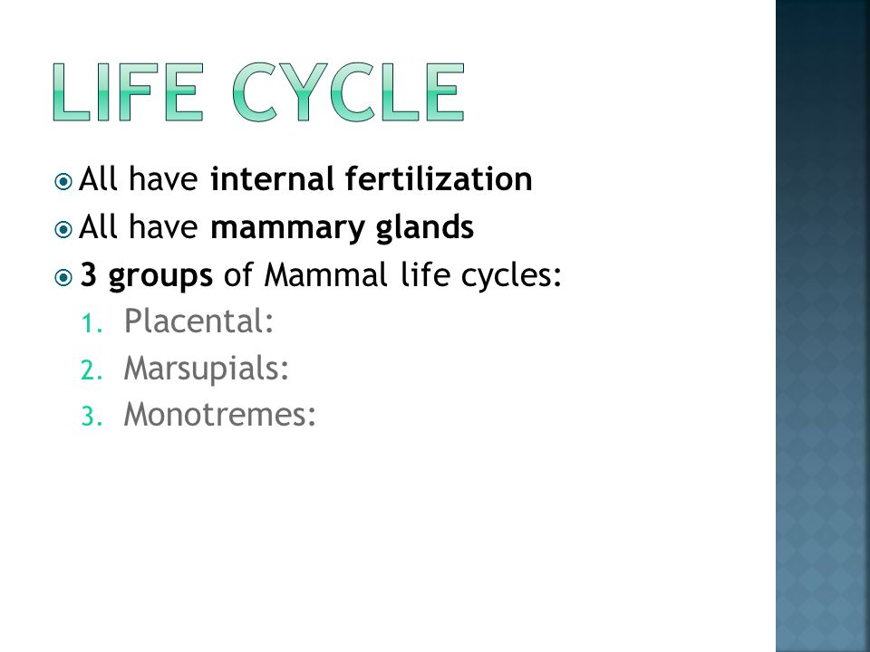 Life cycle All have internal fertilization All have mammary glands
