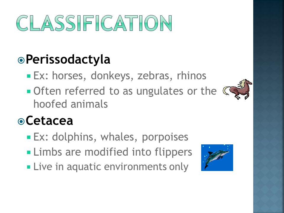 Classification Perissodactyla Cetacea