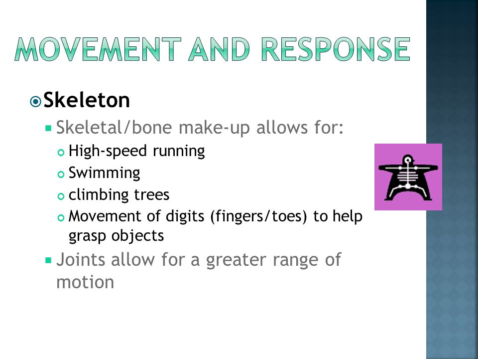 Movement and response Skeleton Skeletal/bone make-up allows for: