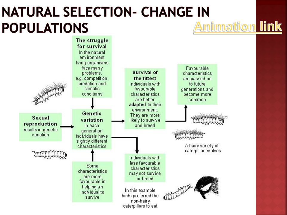 Natural selection- Change in populations