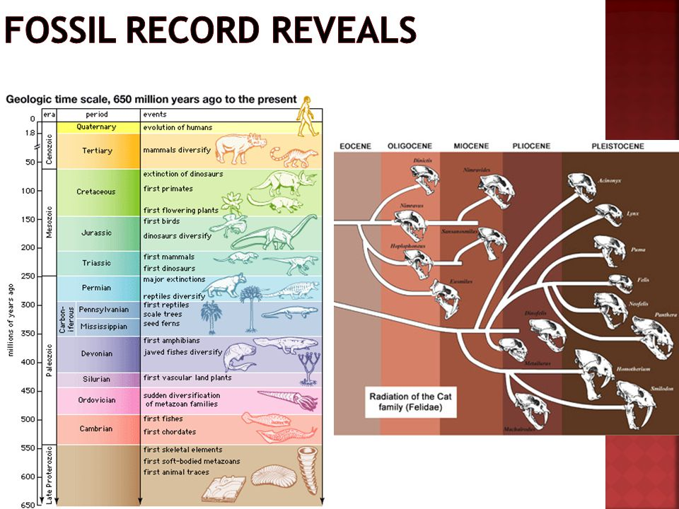 Fossil record reveals