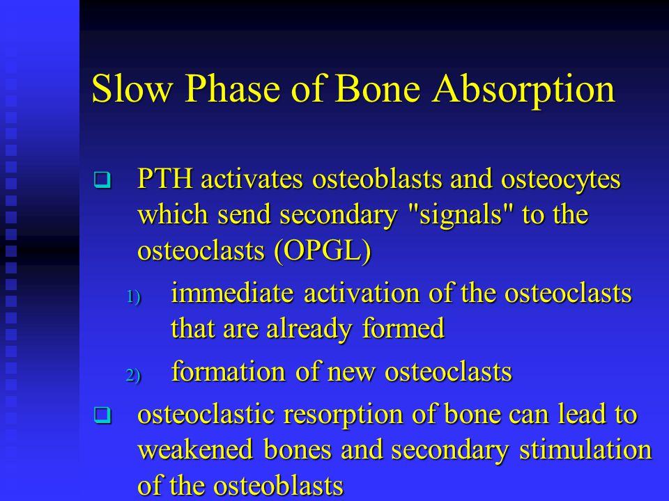 Slow Phase of Bone Absorption