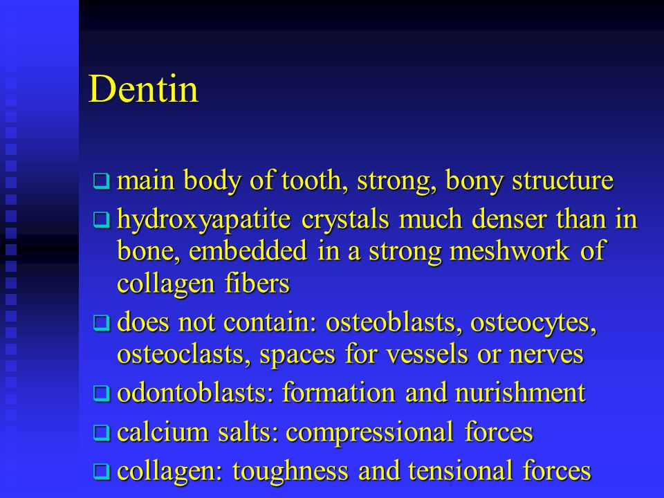 Dentin main body of tooth, strong, bony structure