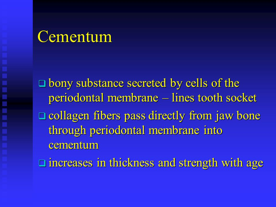 Cementum bony substance secreted by cells of the periodontal membrane – lines tooth socket.