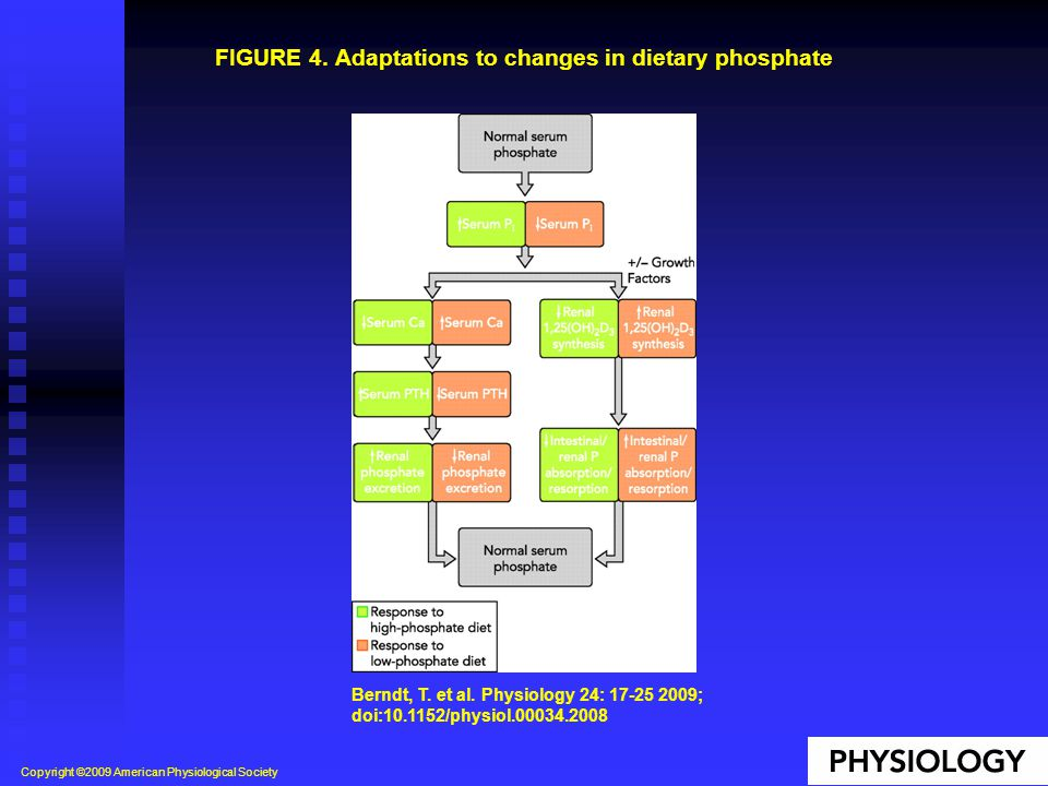 FIGURE 4. Adaptations to changes in dietary phosphate