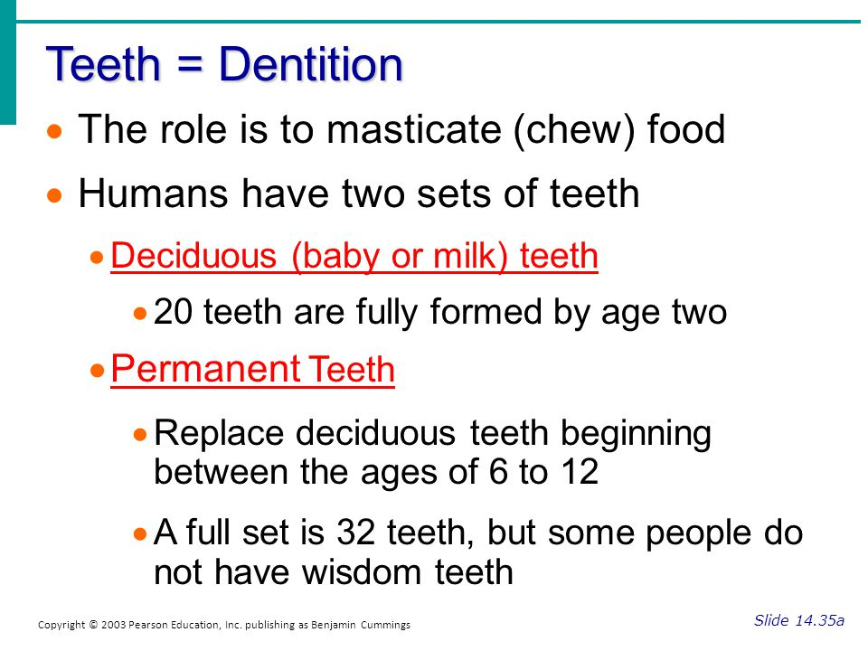 Teeth = Dentition The role is to masticate (chew) food