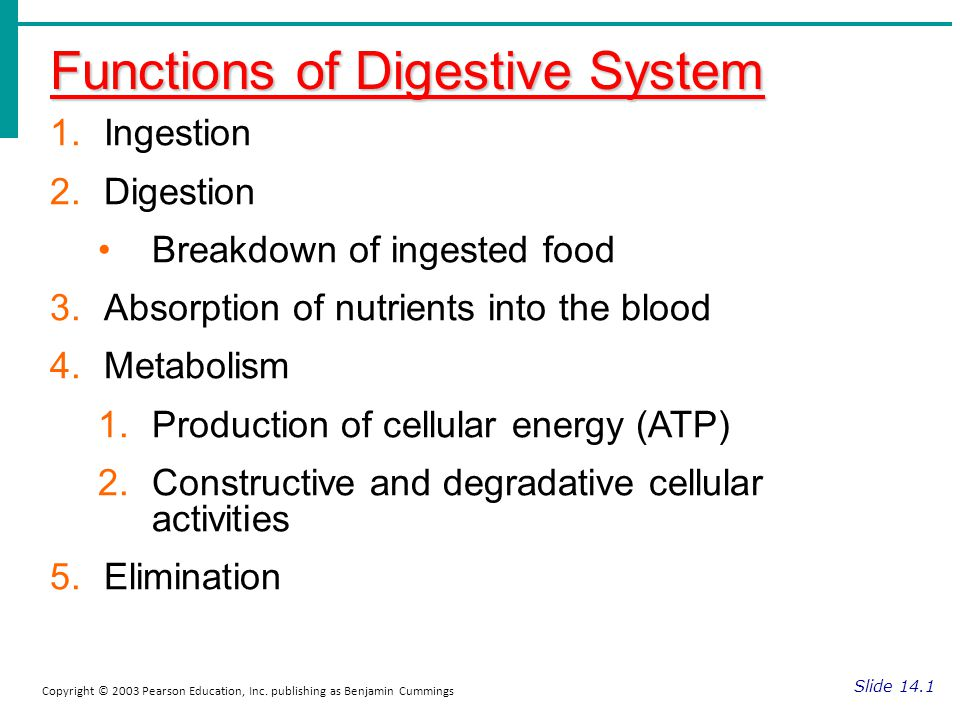 Functions of Digestive System