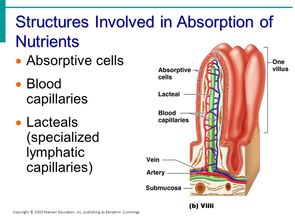 Structures Involved in Absorption of Nutrients