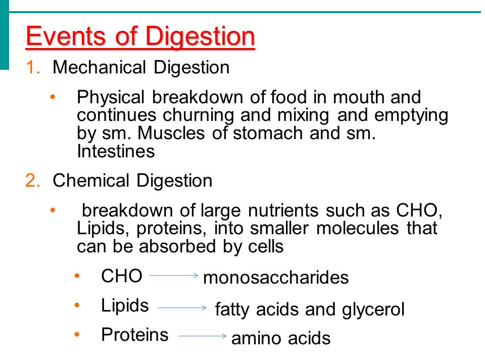 Events of Digestion Mechanical Digestion