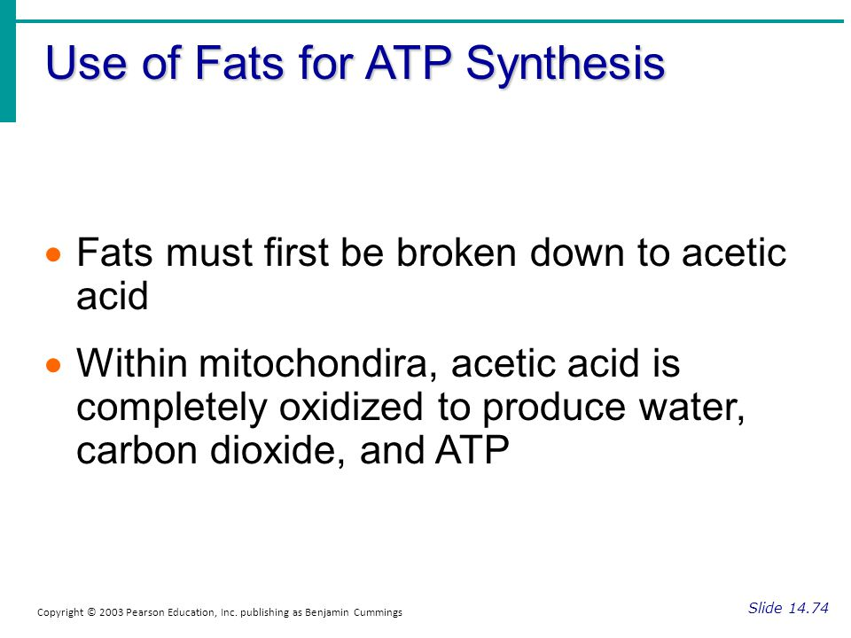 Use of Fats for ATP Synthesis