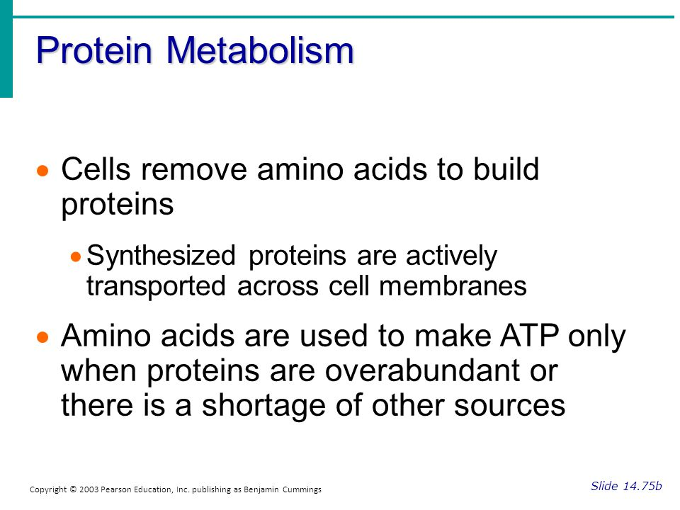 Protein Metabolism Cells remove amino acids to build proteins