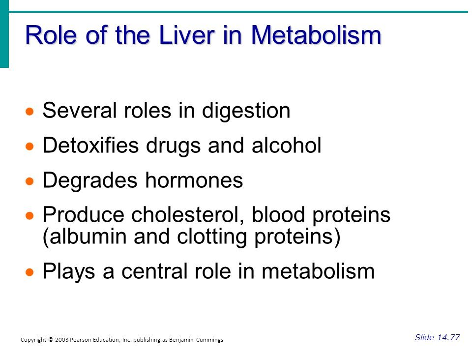 Role of the Liver in Metabolism