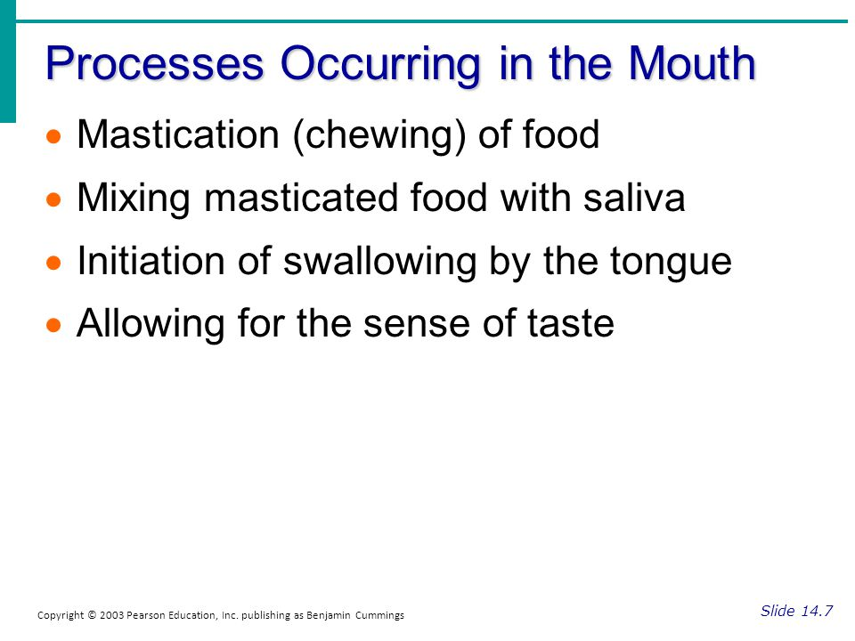Processes Occurring in the Mouth