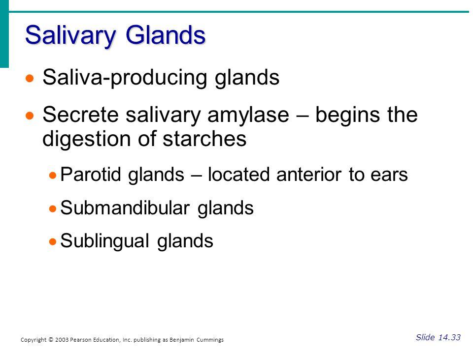 Salivary Glands Saliva-producing glands