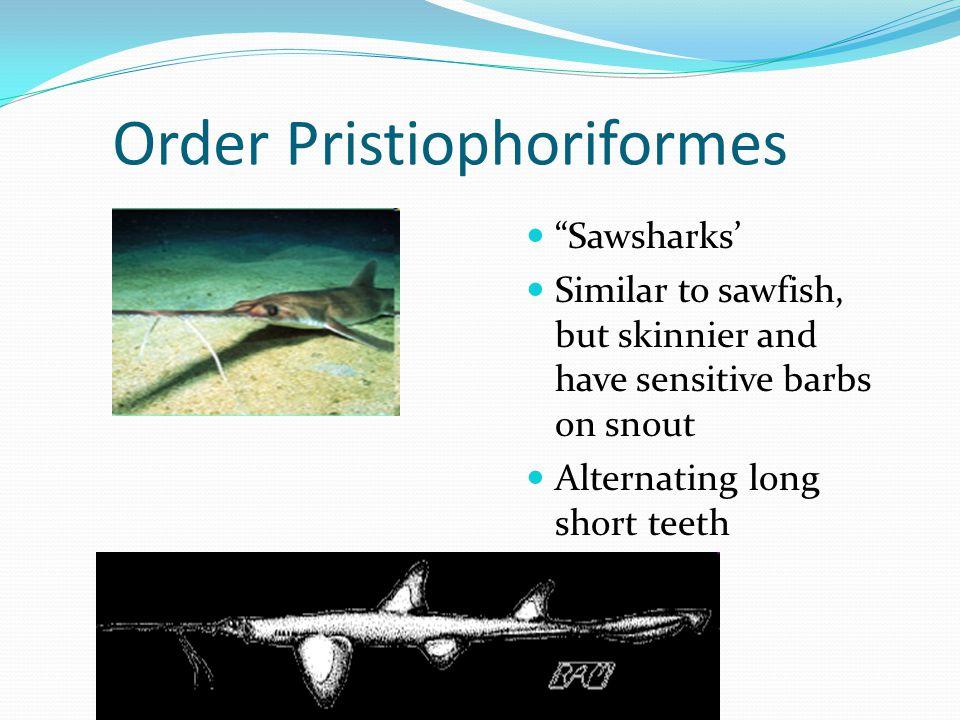 Order Pristiophoriformes
