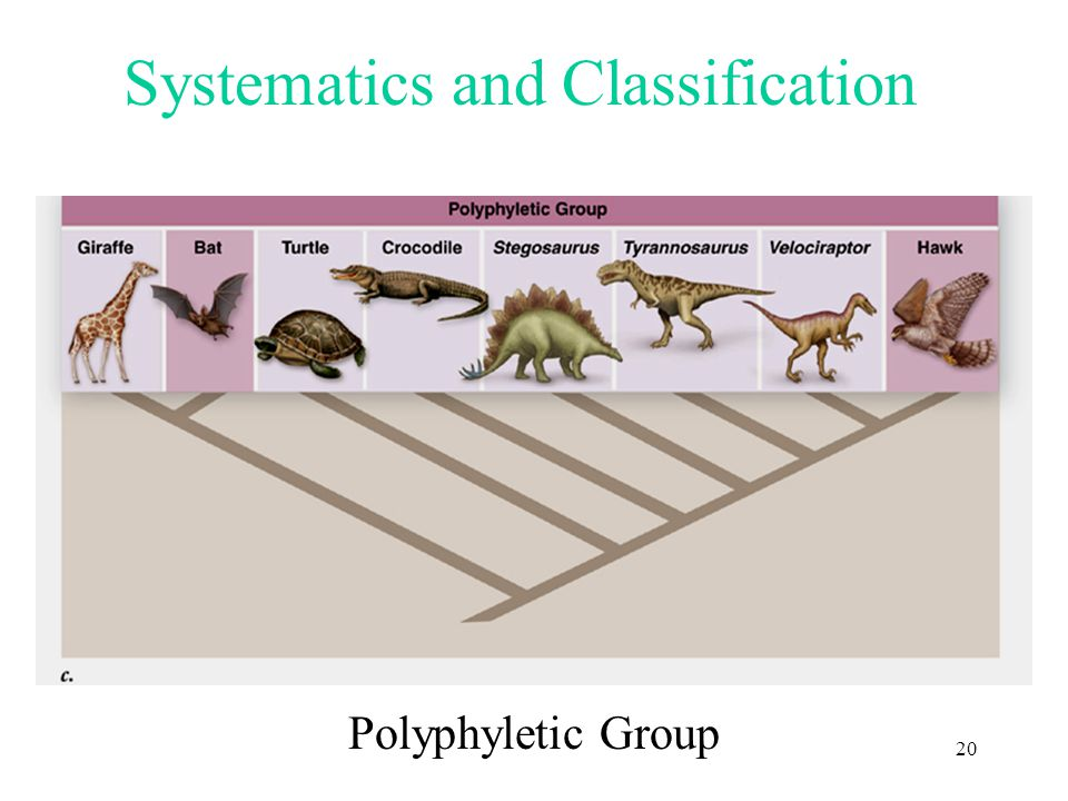 Systematics and Classification