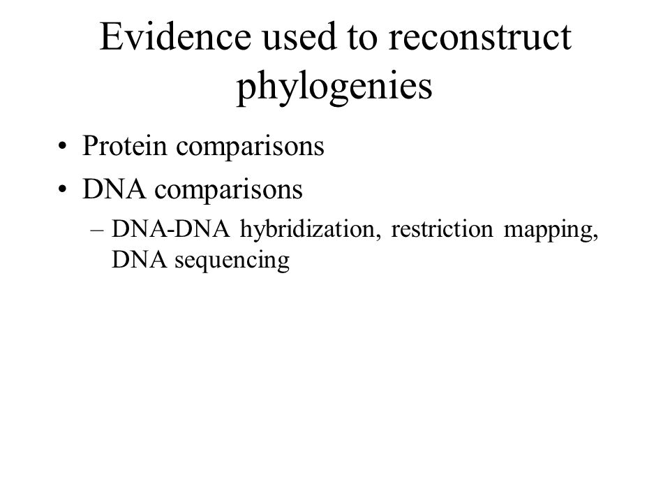 Evidence used to reconstruct phylogenies
