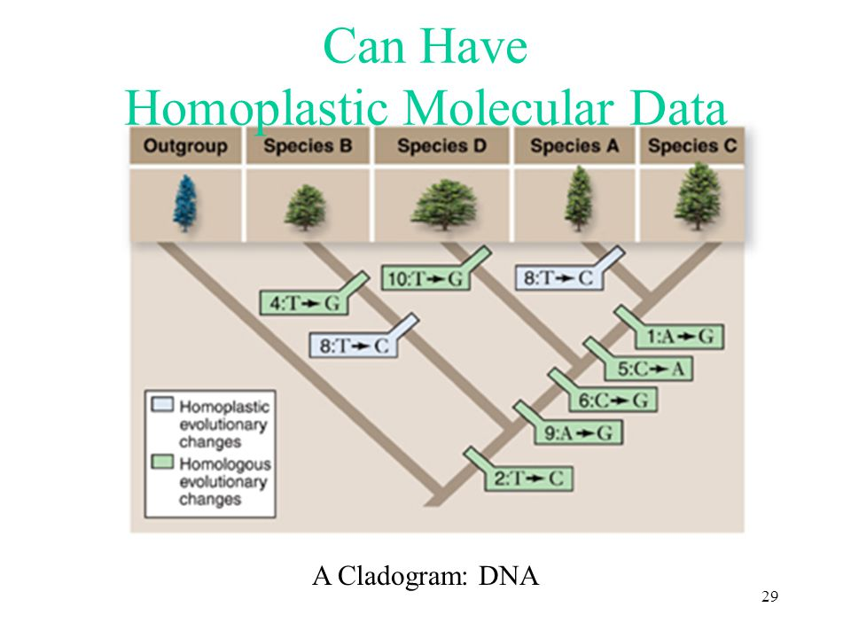 Can Have Homoplastic Molecular Data