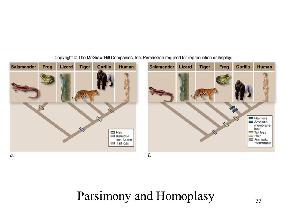 Parsimony and Homoplasy