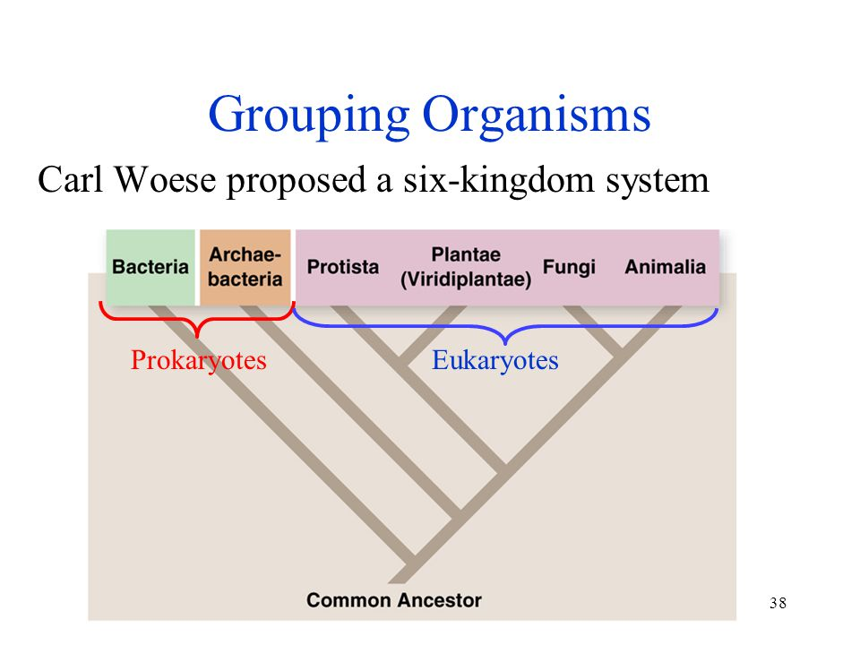Grouping Organisms Carl Woese proposed a six-kingdom system