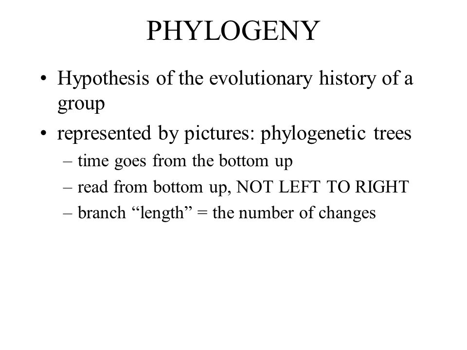 PHYLOGENY Hypothesis of the evolutionary history of a group