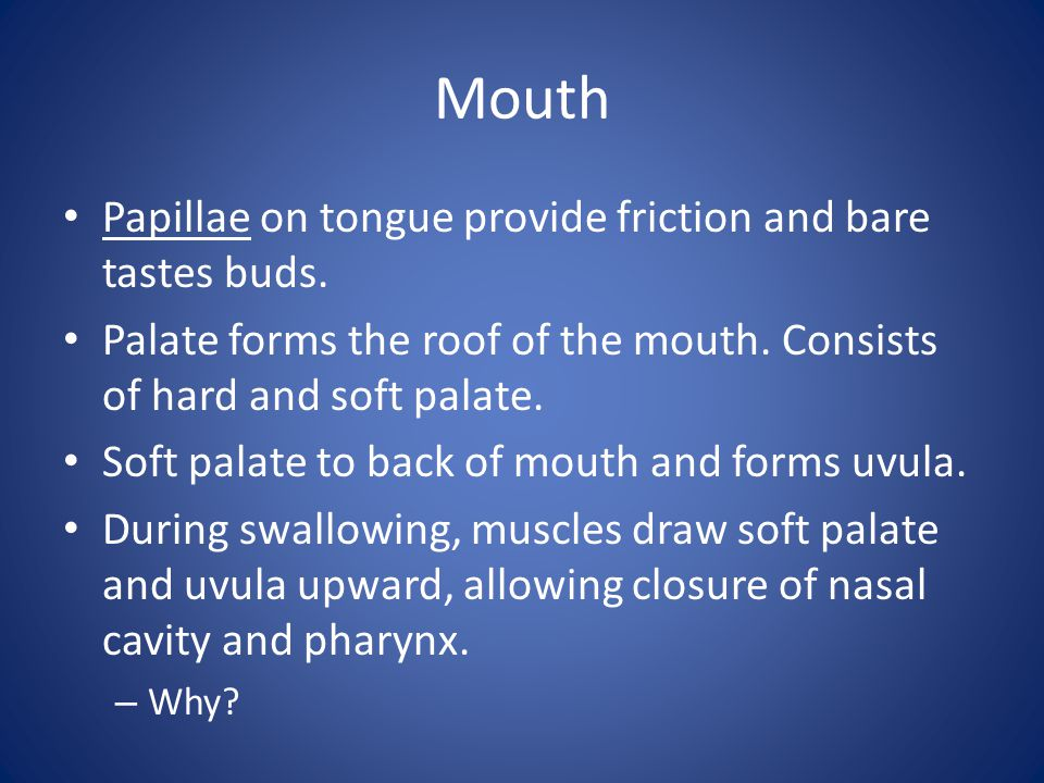 Mouth Papillae on tongue provide friction and bare tastes buds.