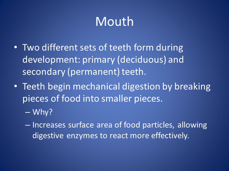 Mouth Two different sets of teeth form during development: primary (deciduous) and secondary (permanent) teeth.