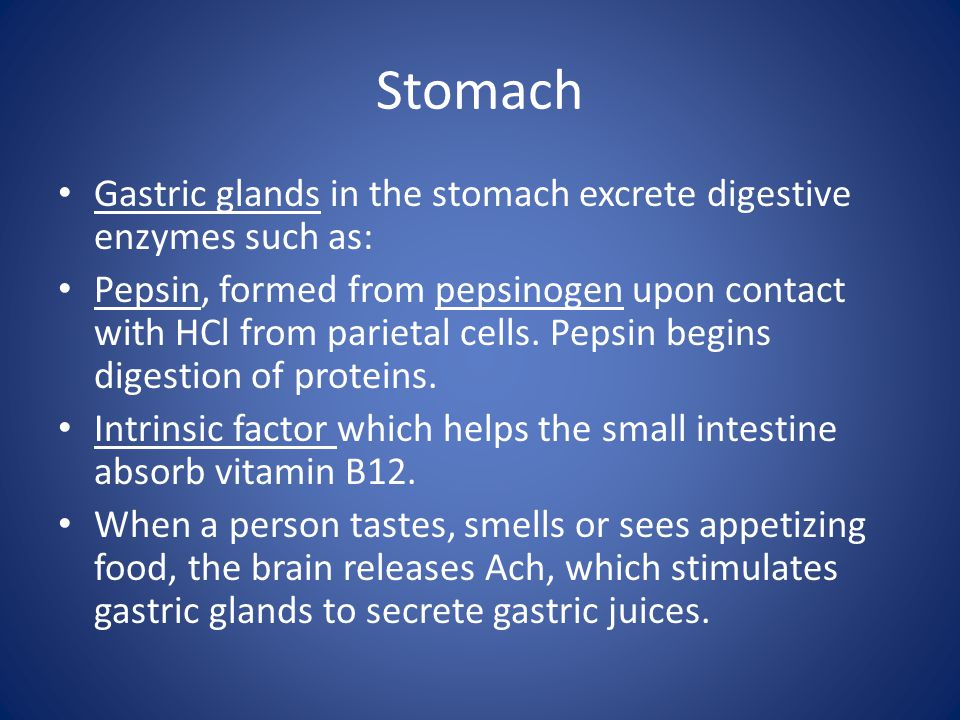 Stomach Gastric glands in the stomach excrete digestive enzymes such as: