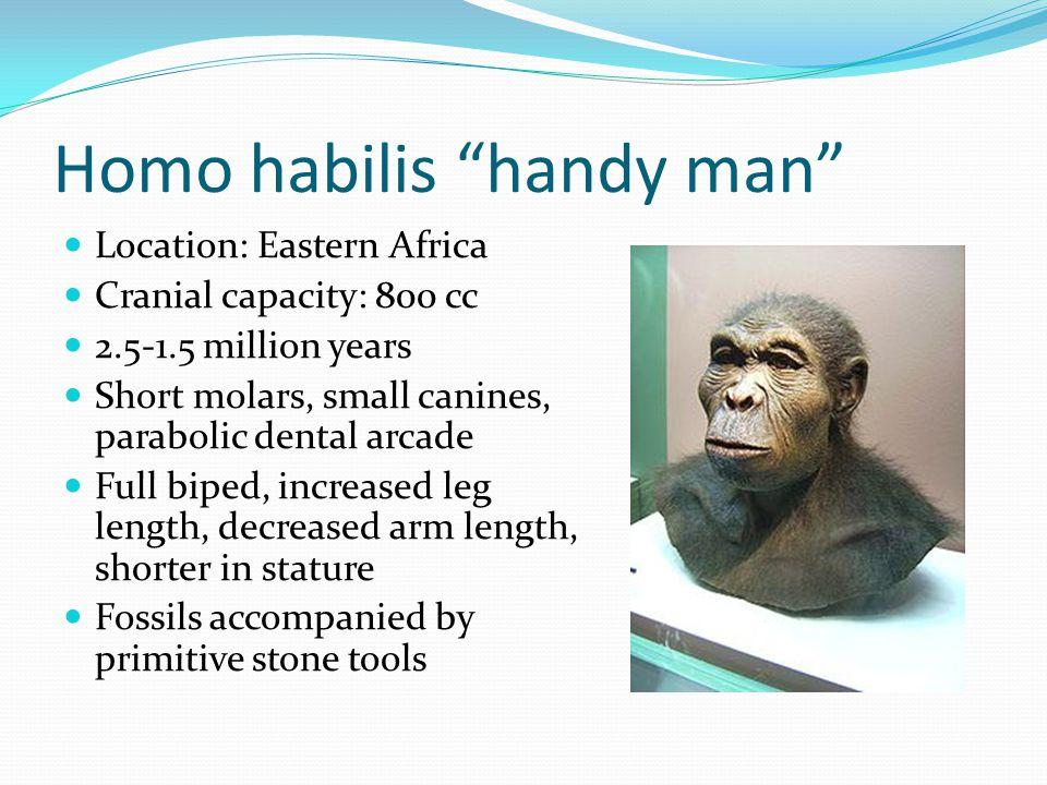 Homo habilis handy man